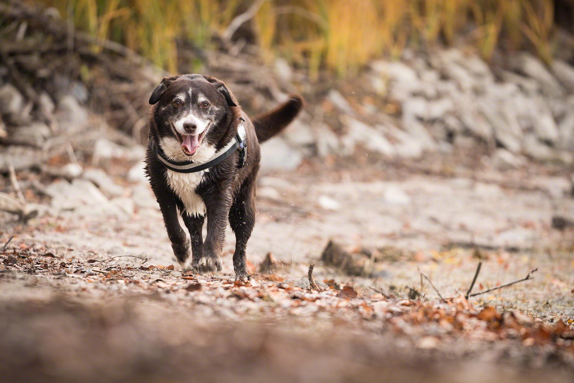 Hundefotografie Hundeportrait