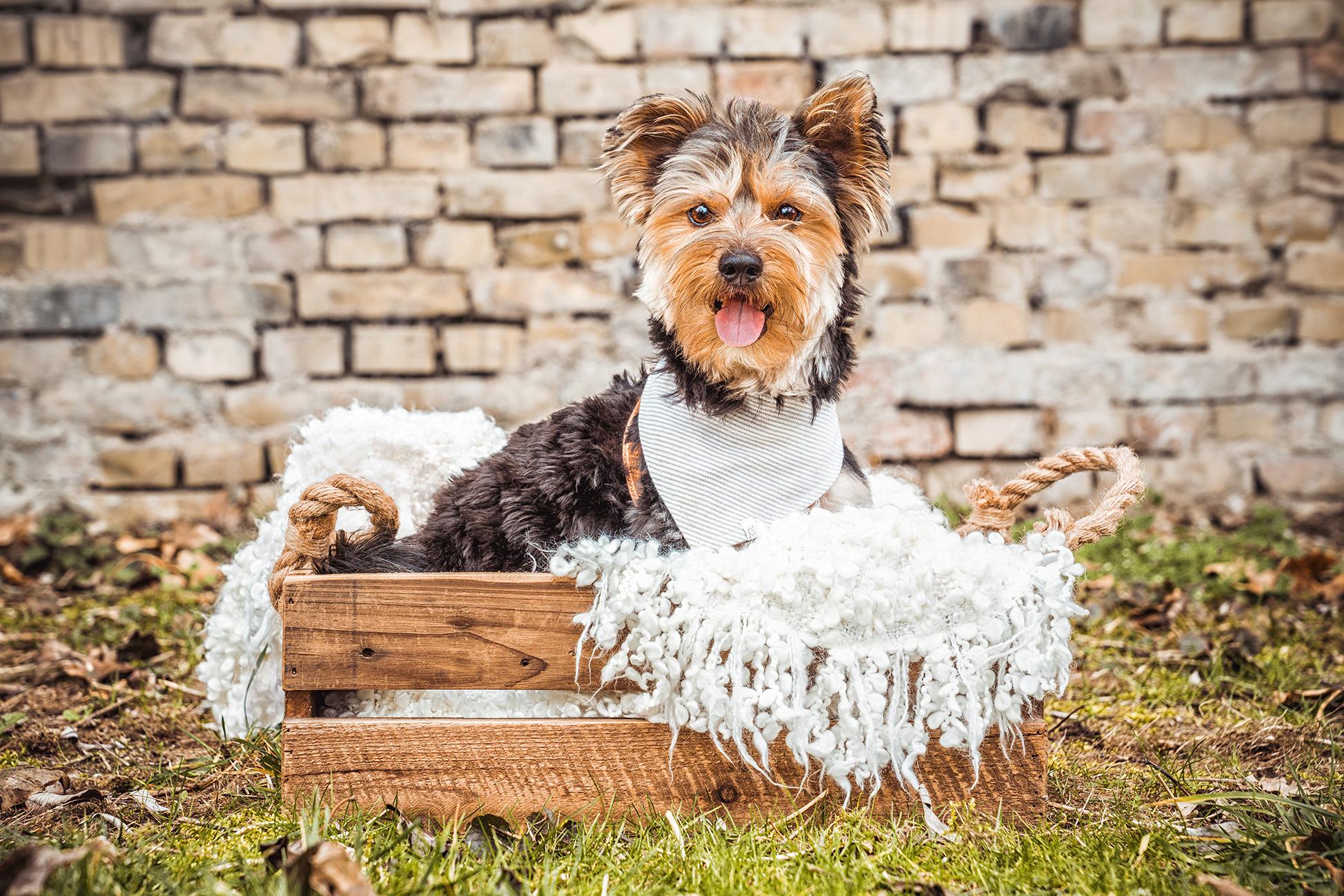 Hundeshooting Hundeportrait